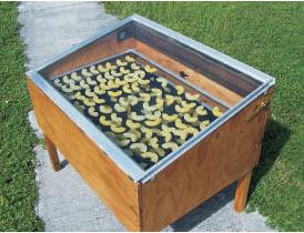 solar-dryer